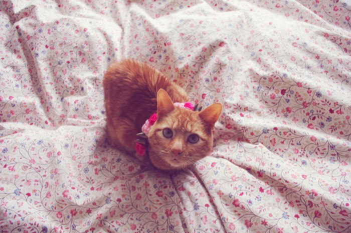 chester-cat-cute-kitten-photography-ginger-animal-cute-love-