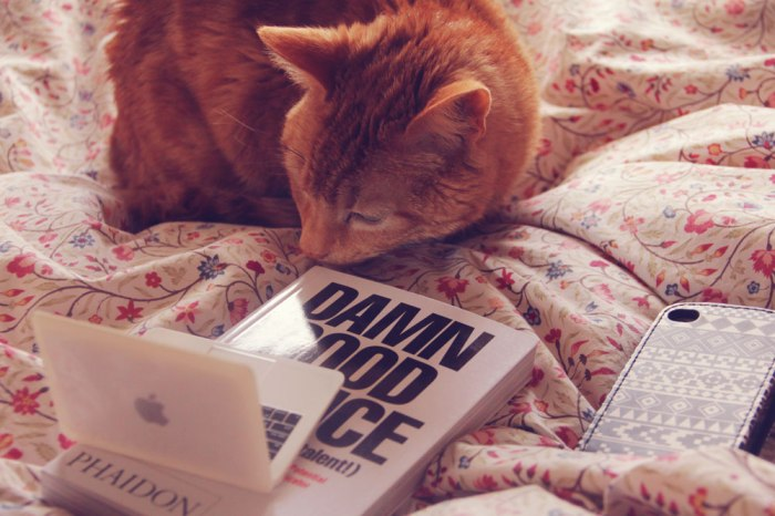 chester-cat-ginger-tumblr-cute-sleeping-animal-damn-good-advice-for-people-with-talent-book-urban-outfitters