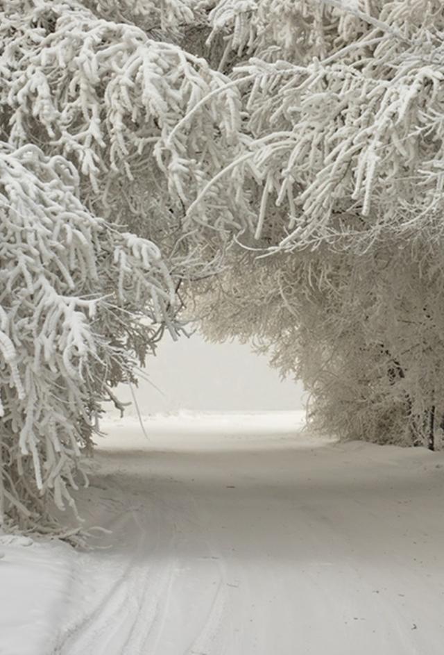 merry season snow