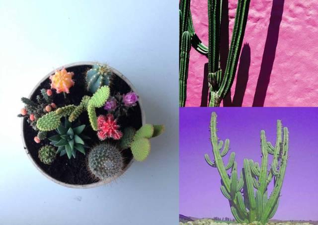 cactus-photography-kaktusas-cacti-tropical-desert-colourful-tumblr flower nature